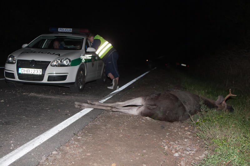 Policija prašo vairuotojų kelyje saugotis laukinių gyvūnų