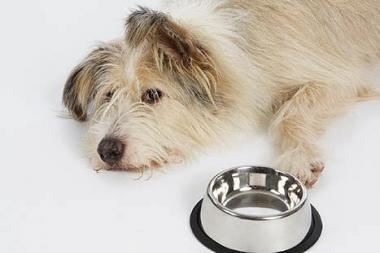 Šunys nemokamai vaišinami sriuba