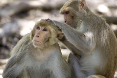 Rusai siūlo į Marsą siųsti beždžionę