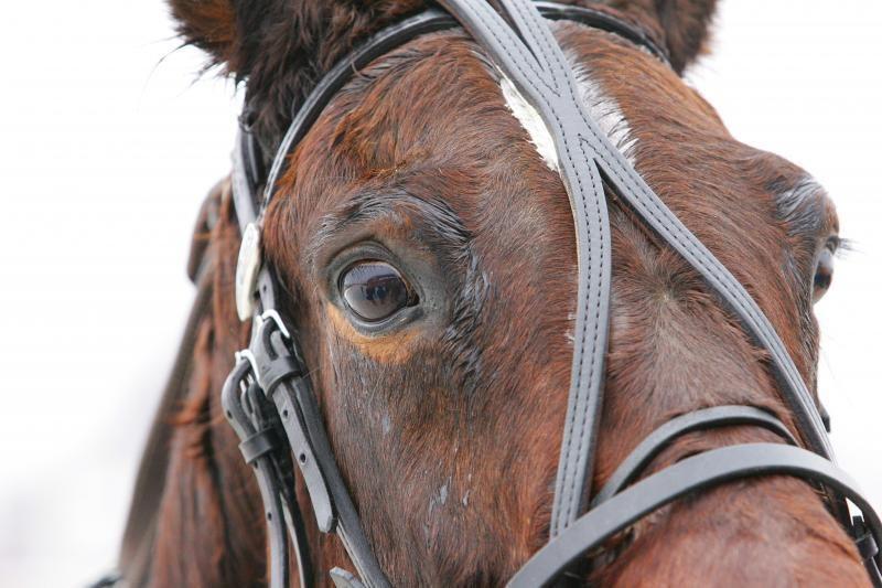 Vilniaus rajone išgelbėtas į rūsį įkritęs arklys