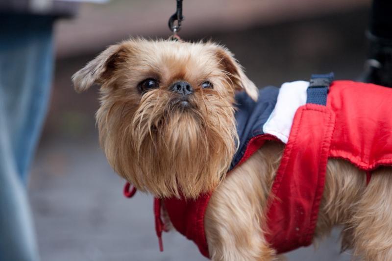 Šunų kirpyklose antplūdis tęsiasi nuo Velykų