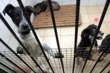 Siūloma didinti baudas už žiaurų elgesį su gyvūnais