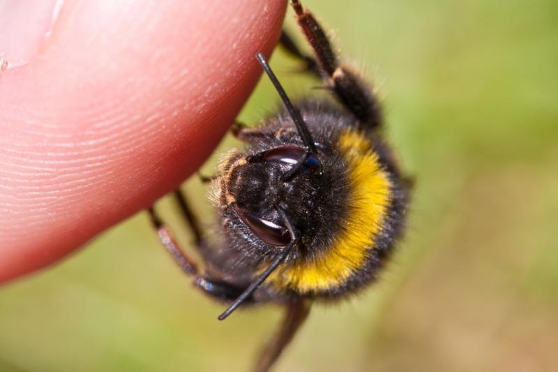 """Klaipėdoje bitės išsigandusi """"BMW"""" vairuotoja rėžėsi į medį"""
