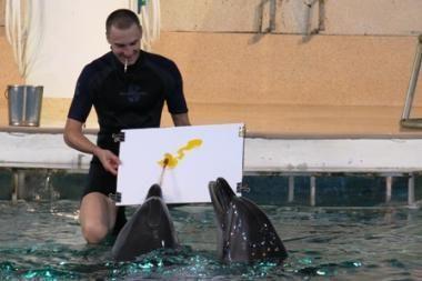 Sostinėje bus atidaryta delfinų piešinių paroda