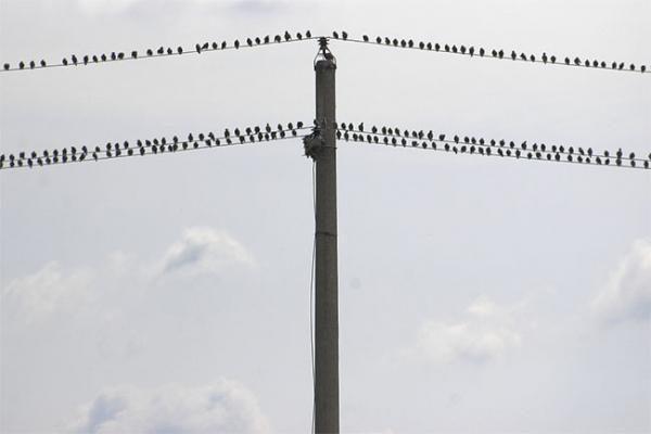 Sekmadienį - rudeninės paukščių palydos