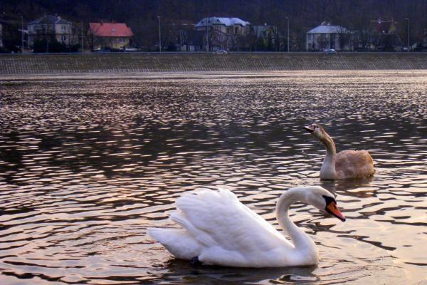 Į Lietuvą po žiemos sugrįžta paukščiai