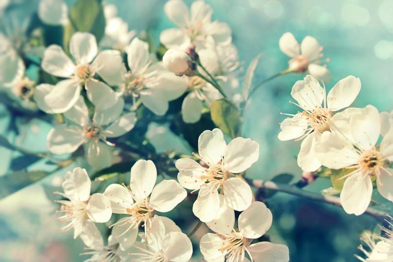 S. Paltanavičius: gamta kvepia ankstyvu pavasariu