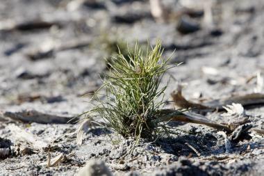 Ukmergės raj. pasodinta 12 tūkst. medelių