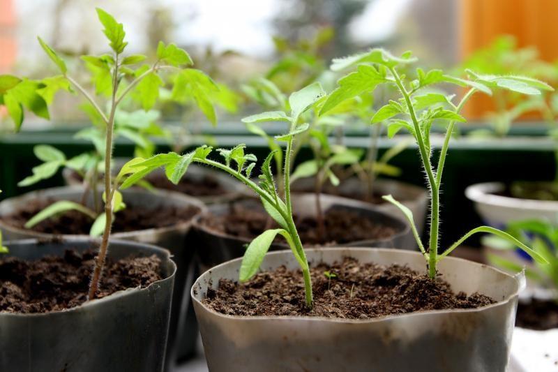 Sėklų parduotuvės jau pasiruošė pavasario sėjai
