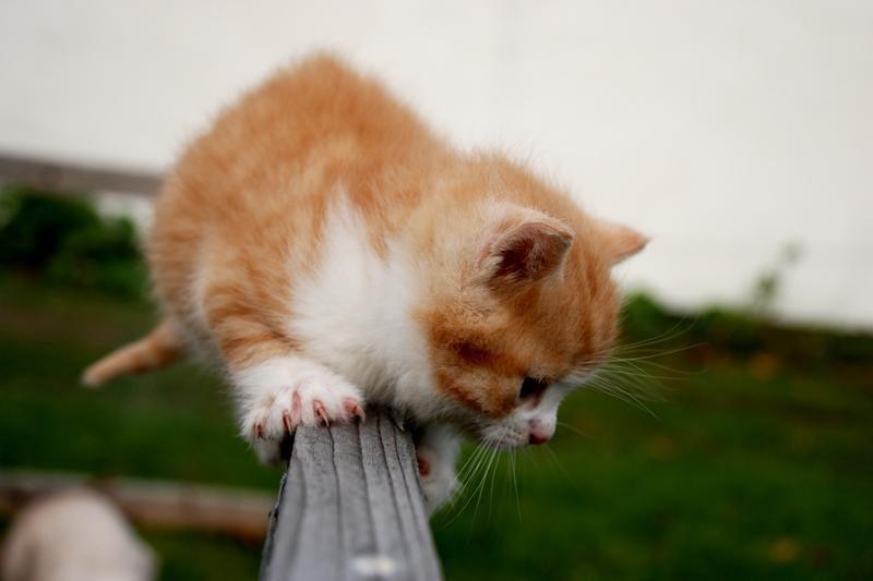 Klaipėdos daugiabučio kieme - keturi negyvi kačiukai
