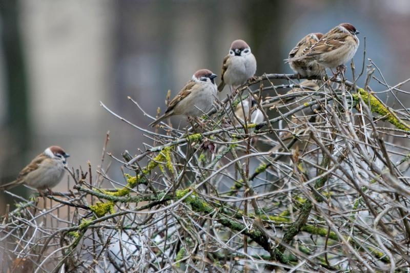 Paukščių dienos 90-mečio proga Lietuvoje bus keliami inkilai
