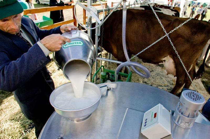 Pieno gamintojai ir toliau dirbs nuostolingai