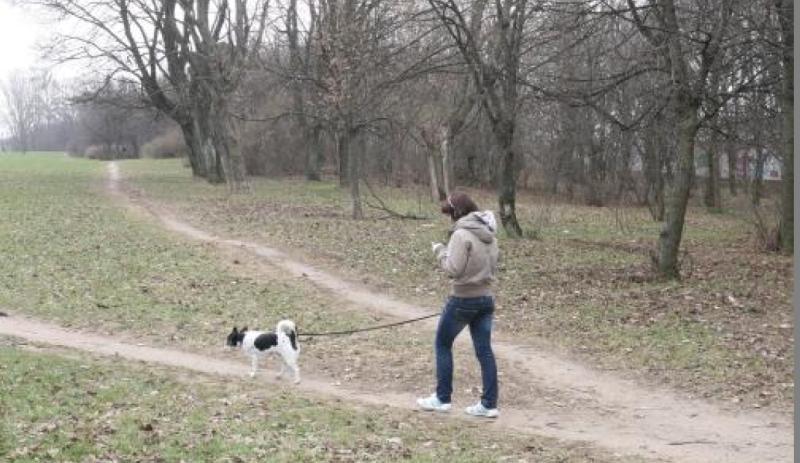 Kretingą          vaduos nuo šunų išmatų