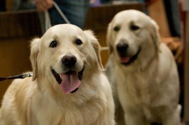Prie prekybos centro pavogtas šuo (papildyta)