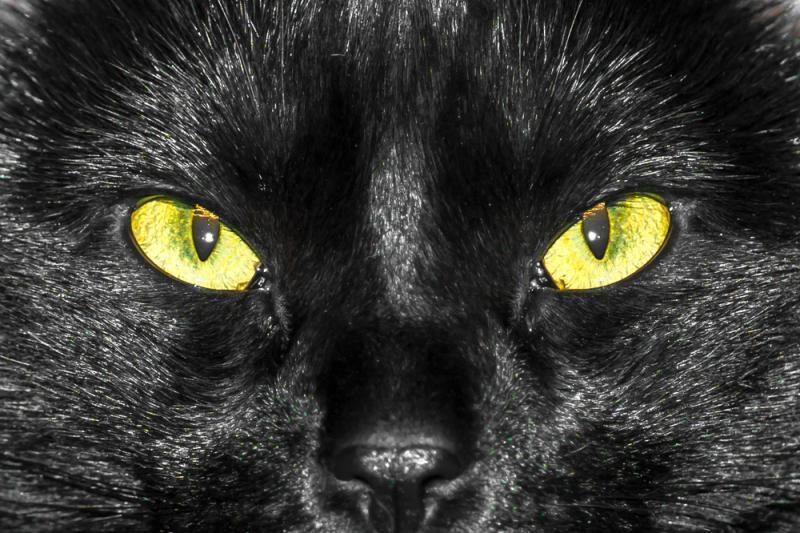 Kodėl juodai katei sunkiau rasti namus?