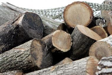 Be leidimo iškirto 15 medžių