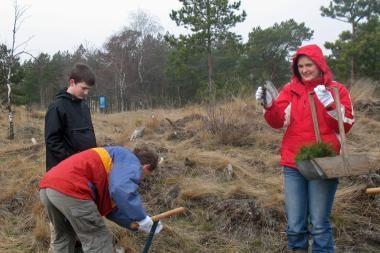 Tęsiami Kuršių nerijos miško atsodinimo darbai
