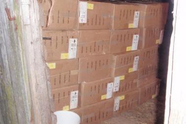 Pasieniečiai likvidavo kontrabandinių rūkalų sandėlį