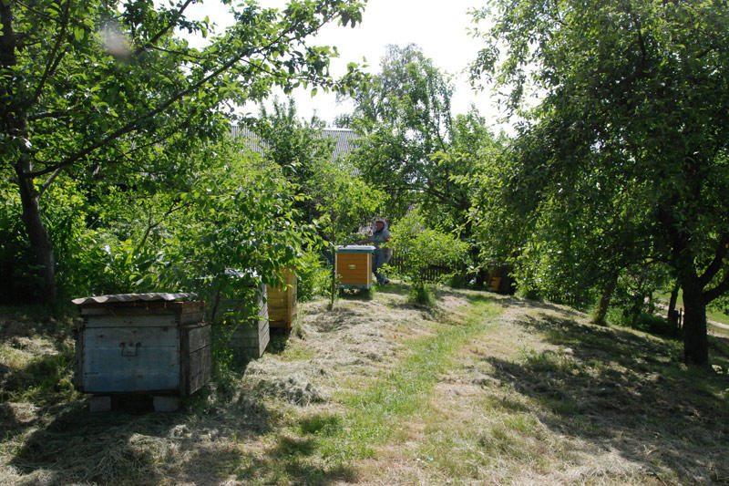 Medus su išskirtinės kokybės ženklu
