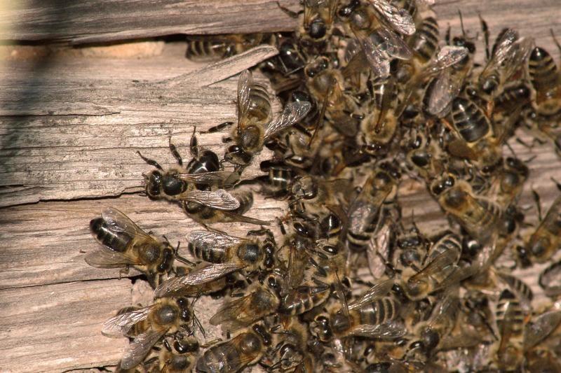 Niujorkietis namuose laikė 3 mln. bičių
