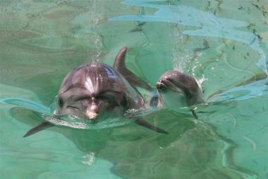 Delfinariume - naujagimio šypsena