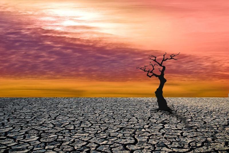 Mokslininkas: dalis Žemės greitai gali tapti negyvenama