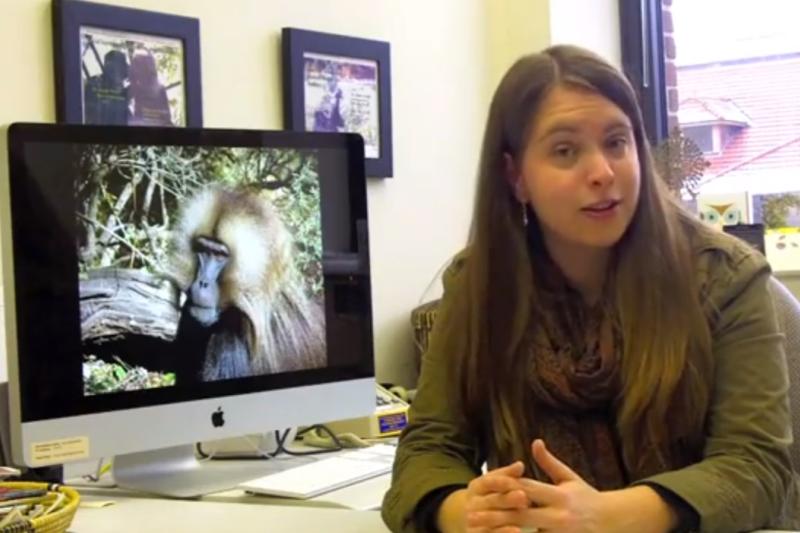 Žmonių kalbos kilmę padės nustatyti primatų skleidžiami garsai?