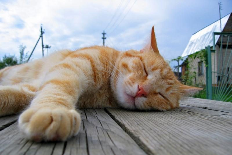 Miesto Aliaskoje mero pareigas jau 15 metų eina katinas