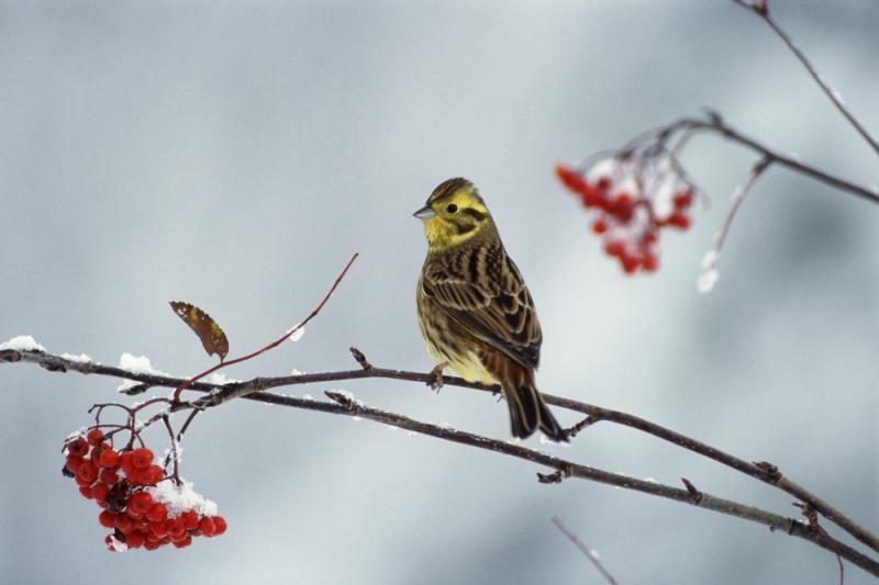 Pamatę žiemą, paukščiai išskrido, bet vėl sugrįžta
