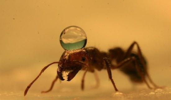 Faktai ir mitai, kurių nežinote apie skruzdes