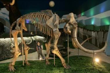 Mokslininkai gali antram gyvenimui prikelti mamutus