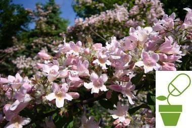 Bibliotekoje – patarimai apie sodą ir daržą