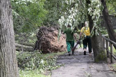 Valstybinės reikšmės miškuose medžių tvarkyti negalima