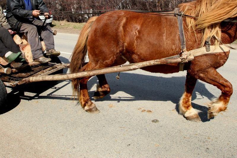 Šakių rajone sunkvežimiui atsitrenkus į arklio traukiamą vežimą žuvo žmogus