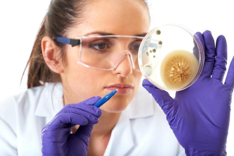 Mokslininkų atrastos bakterijos įminė naujų gyvybės atsparumo mįslių