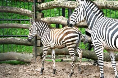 Aplinkos ministerija pasirengusi pasirūpinti Kauno zoologijos sodu