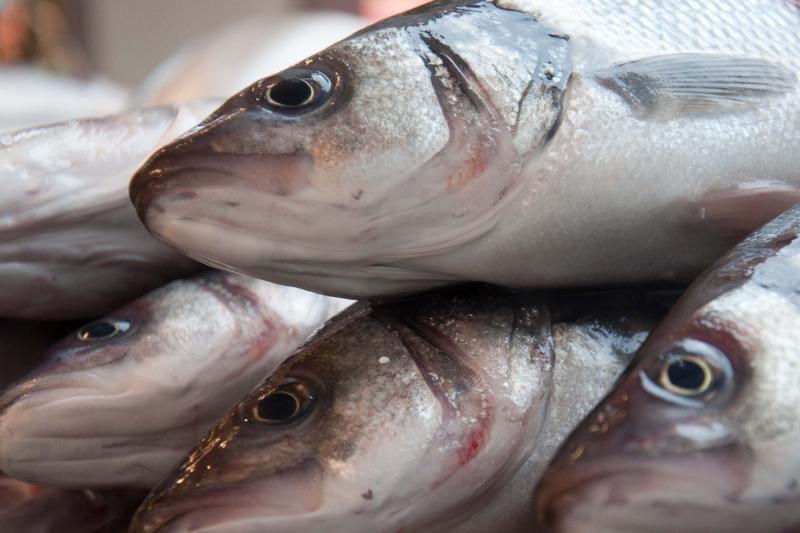 V. Mazuronis: žuvų ištekliai turi būti kuo tausiau naudojami