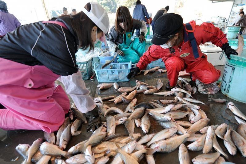 Japonijos pakrantėse sugautos žuvys - itin radioaktyvios