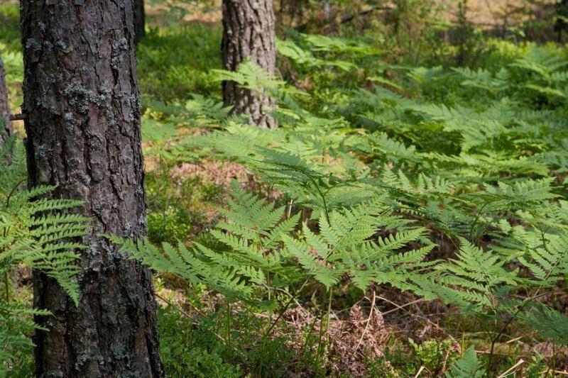 Kalvarijos savivaldybėje kertant mišką žuvo darbininkas