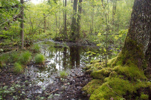 Lietuvos miškai tampa neįvažiuojami