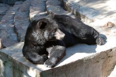 Zoologijos sodas laukia Kauno choro laimėtų pinigų