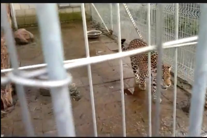 """Gyvūnų teisių gynėjai reikalauja uždrausti """"Mini Zoo"""" veiklą"""