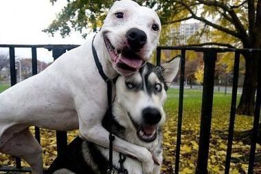 Uždraus 13 šunų veislių