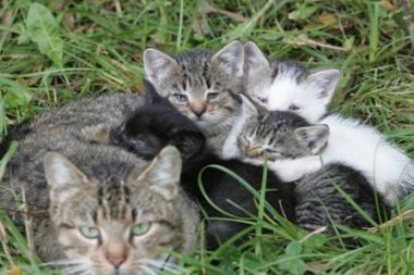 Ugniagesiai gelbsti kačiukus