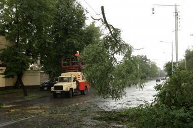 Medžius reikia tvarkyti ne tik po audros