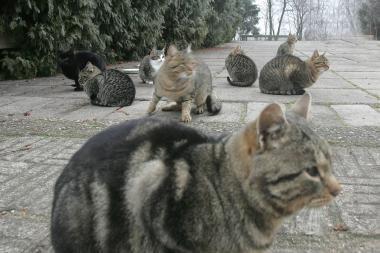 Vilniečiai galės šerti benamius gyvūnus