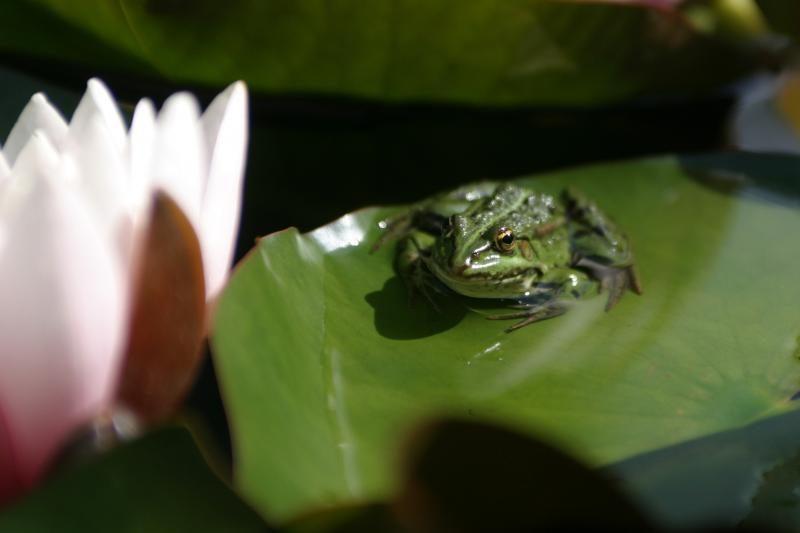 Būkime budrūs kelyje - prasidėjo pavasarinės varliagyvių migracijos