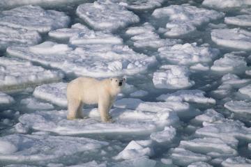 Arkties ledynai tirpsta vis greičiau
