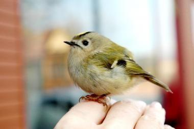 Žemės dienos proga - paukščių šventė