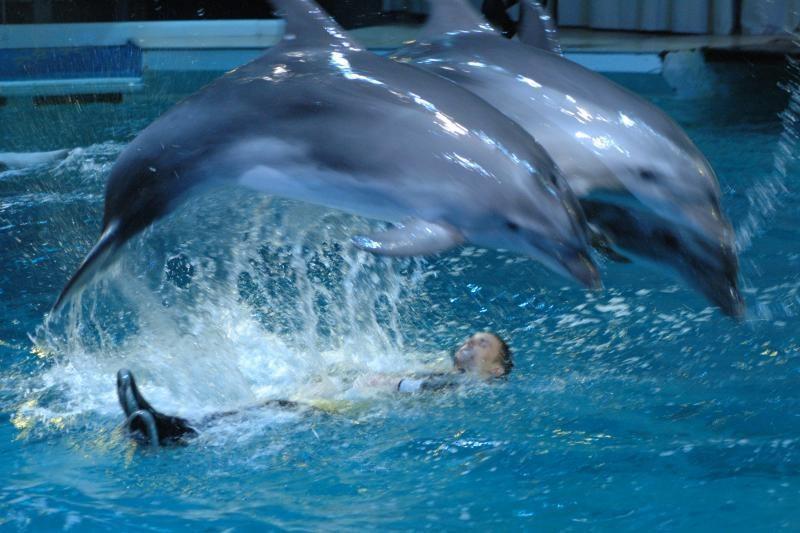 """Ukraina šalies vandenų apsaugai treniruoja """"delfinus-žudikus"""""""